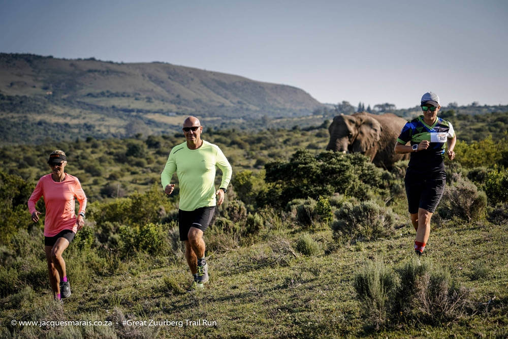 GZT Run 2019 addo elephants
